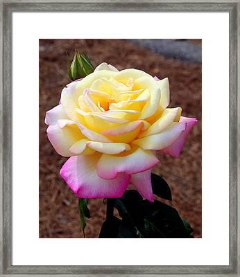 Lovely Framed Print by Paula Tohline Calhoun