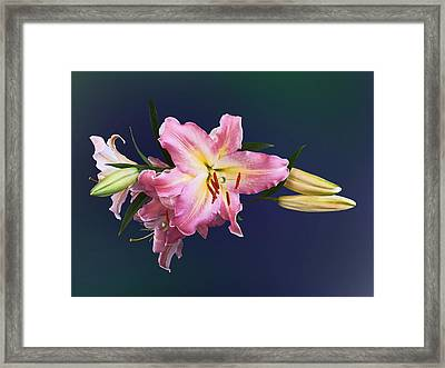 Lovely Pink Lilies Framed Print by Susan Savad