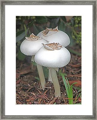 Lovely Trio Framed Print by Jeanne Kay Juhos