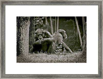 Lovers Spat Amongst Primates Framed Print by DigiArt Diaries by Vicky B Fuller