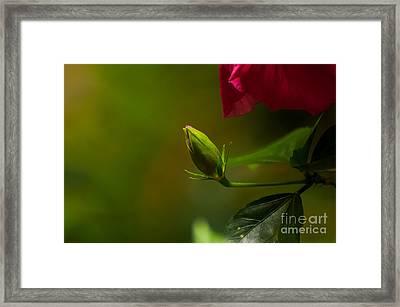 Loves' Bloom Framed Print