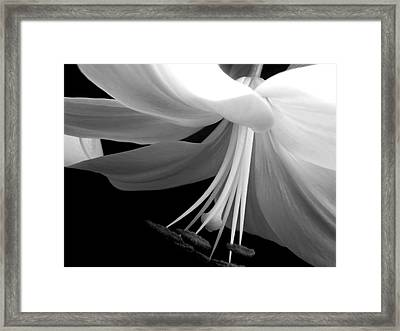 Love's Light Framed Print by Leah Moore