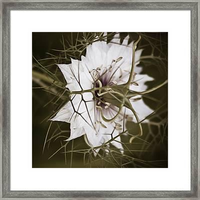 Love's Thorns Framed Print