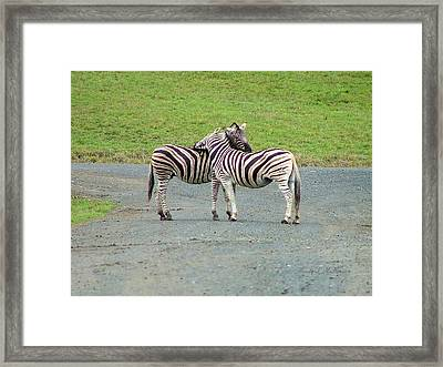 Lovin' Stripes Framed Print