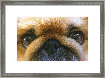 Framed Print featuring the photograph Loving Eyes by Jeanne Andrews