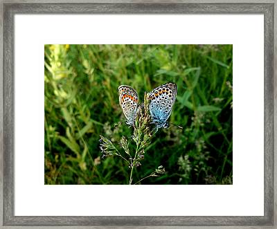 Framed Print featuring the photograph Loving by Lucy D