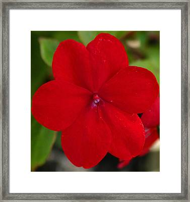 Framed Print featuring the photograph Loving Red by Jeanne Andrews