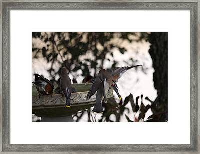 Framed Print featuring the photograph Loving The Cool Water by Jeanne Andrews