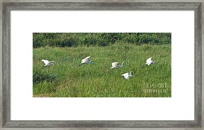 Low Flight  Framed Print