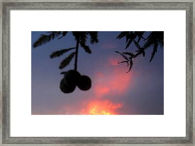 Low Hanging Fruit Framed Print by Juliana  Blessington