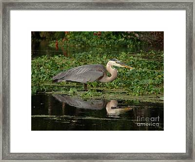 Low Ride Eir Framed Print by Jack Norton