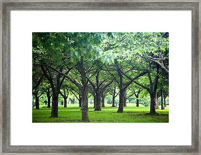 Low Trees In Flushing Meadows-corona Park Framed Print
