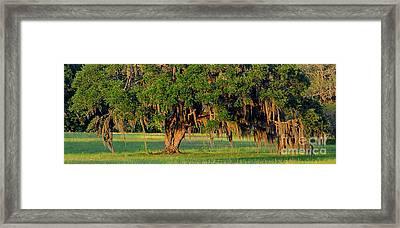 Lowcountry Live Oak Framed Print by Al Powell Photography USA