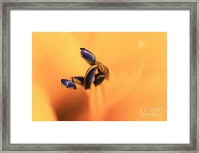 Lucid Framed Print by Lisa McStamp