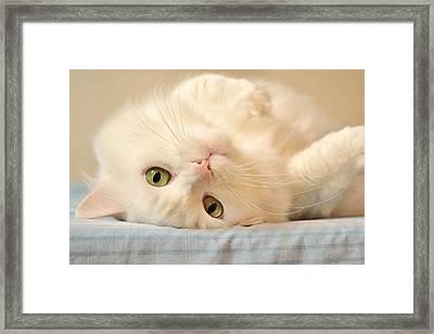 Lucky Bum Framed Print