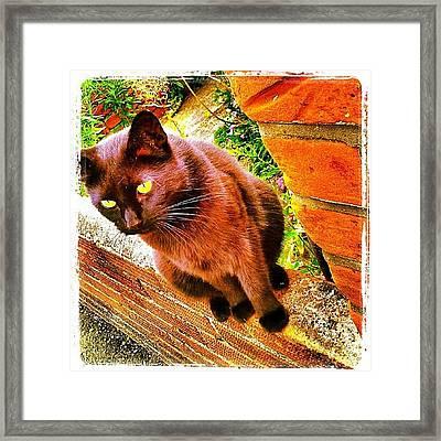 Lucky #cat #catsofinstagram #instacat Framed Print