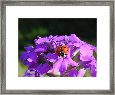 Lucky Ladybug Framed Print