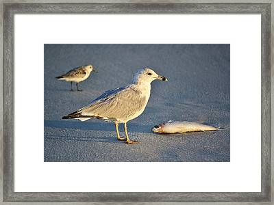Lucky Framed Print by Paulette Thomas