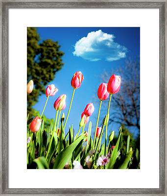 Lucy In The Sky Framed Print by Tamyra Ayles