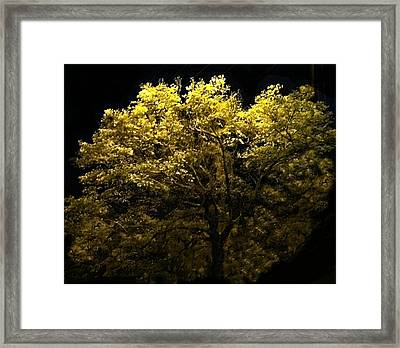 Framed Print featuring the photograph Luminescent Dogwood  by Elizabeth Coats