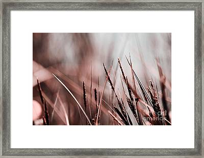Luminis - S03a - Brown Framed Print by Variance Collections