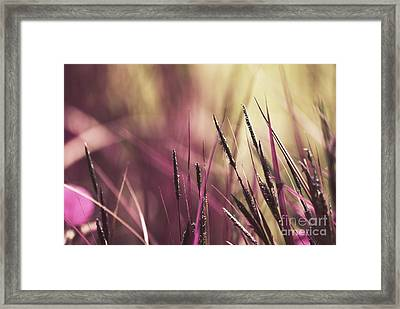 Luminis 02 - S11a Framed Print by Variance Collections
