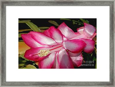 Luminous Cactus Flower Framed Print by Kaye Menner