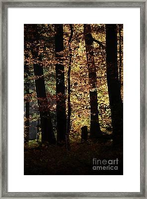 Luminous Forest 3 Framed Print by Bruno Santoro