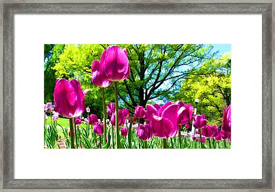 Luminous Purple Tulips In A Flower Garden And Sunny Green Trees Under A Blue Sky Framed Print by Chantal PhotoPix