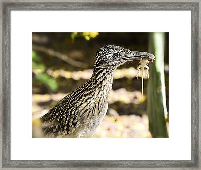 Lunch Anyone Framed Print by Saija  Lehtonen