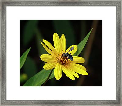 Lunch At Coreopsis Framed Print