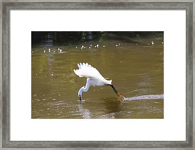 Framed Print featuring the photograph Lunch Coming Up by Jeanne Andrews