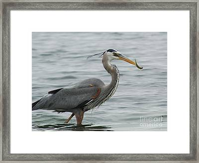 Framed Print featuring the photograph Lunch by Johanne Peale