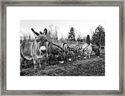 Lunch Framed Print by Monte Arnold