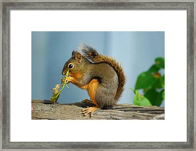 Lunch On A Log Framed Print