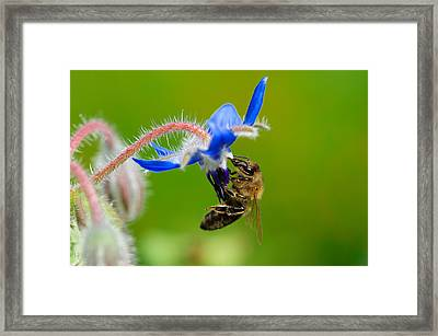 Lunch Time Framed Print by Kitty Bern