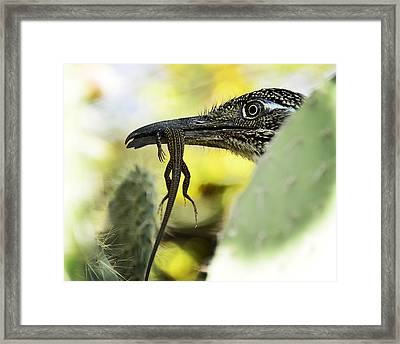 Lunch With A Roadrunner  Framed Print by Saija  Lehtonen