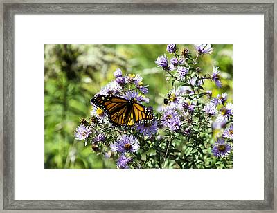 Lunch With Royality II Framed Print