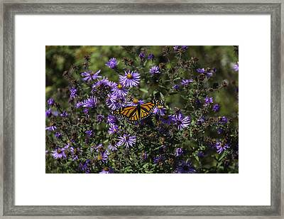 Lunch With Royality Framed Print