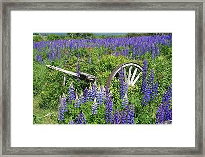 Lupin Wheels Framed Print