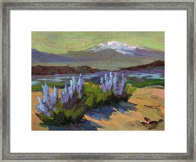 Lupine In Bloom Framed Print by Diane McClary