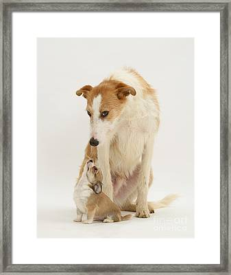 Lurcher And Chihuahua Framed Print