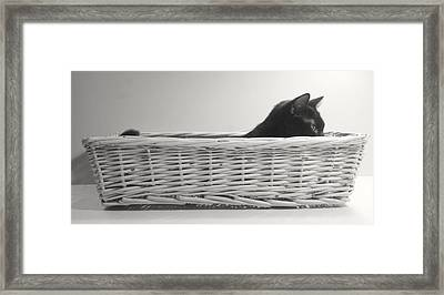 Lurking In The Basket Framed Print by Bernadette Kazmarski