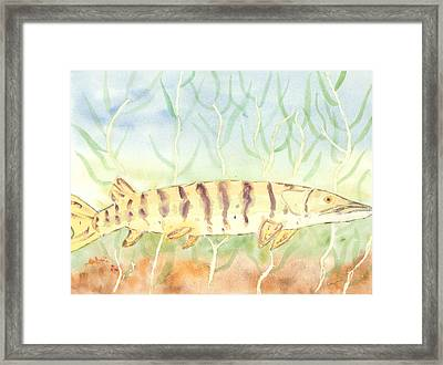 Lurking Tiger Framed Print by David Crowell