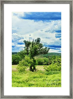 Lush Field Framed Print by HD Connelly