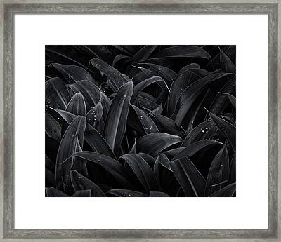 Lush Monochrome Framed Print by Tim Nichols