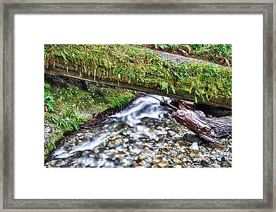 Framed Print featuring the photograph Lush-ous by Kevin Munro