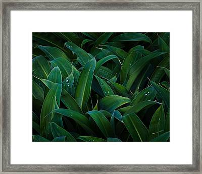 Lush Framed Print by Tim Nichols