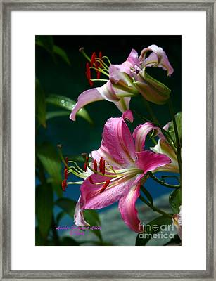 Lushes Fragrant Lilies Framed Print