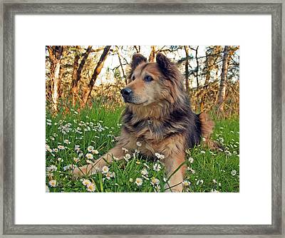 Lying In The Daisys Framed Print by Tyra  OBryant
